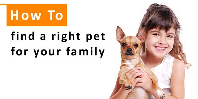 How to Find the Right Pet for Your Family