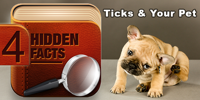 Facts about Ticks and Your Pet