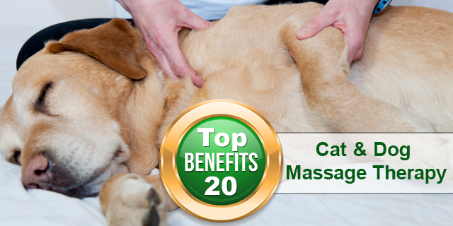 Benefits of Cat and Dog Massage