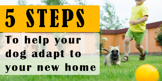 Dog Home Change Anxiety Tips