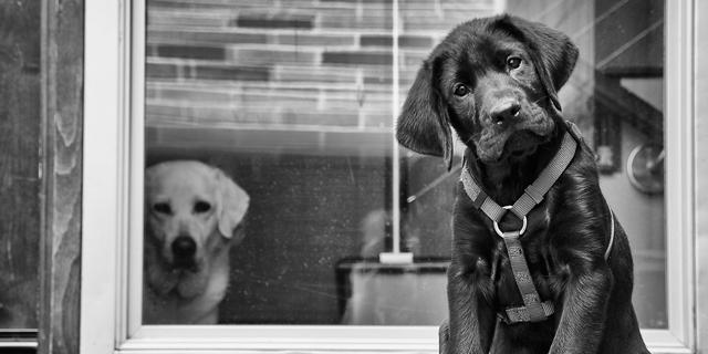 Jealousy in dogs