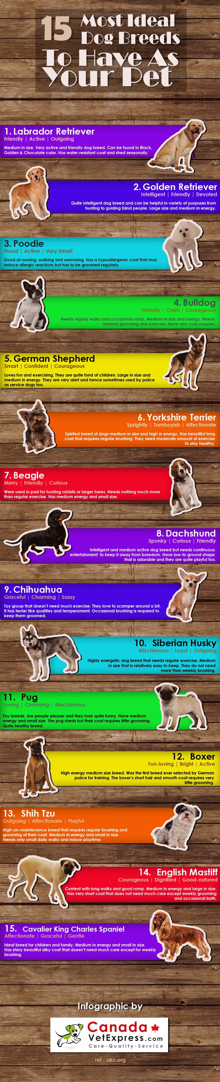 15 Best Pet Dog Breeds To Have