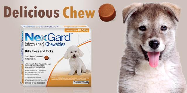 Nexgard Flea Tick Chewables For Dogs - Canada Vet Express
