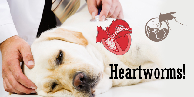 CVE_heartworms-in-dogs
