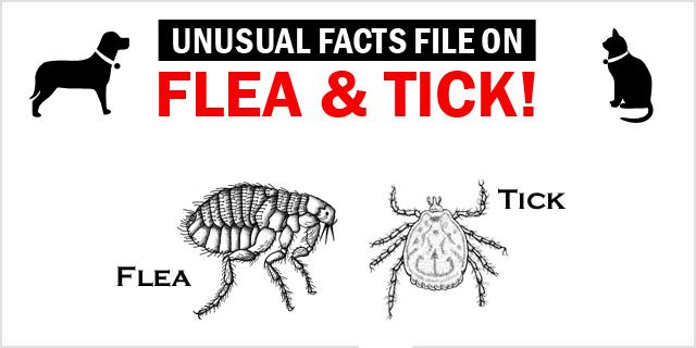 New_CVE_unusal-facts-on-flea-and-tick