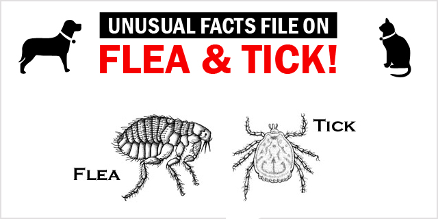 New_CVE_unusal-facts-on-flea-and-tick