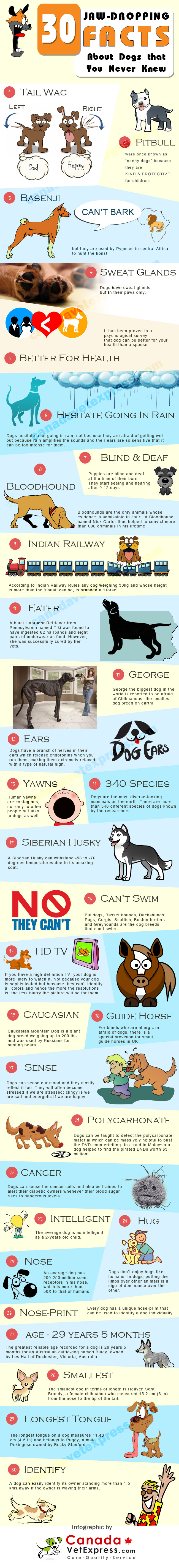 Mind blowing facts about dogs