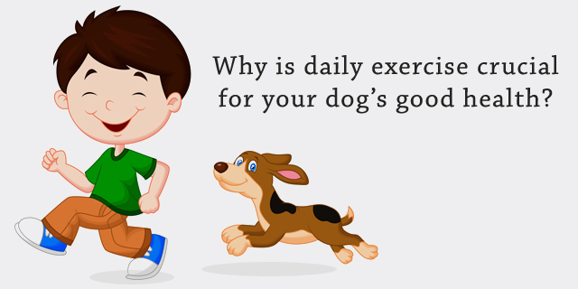 CVE_daily-excersice-for-dogs-good-health