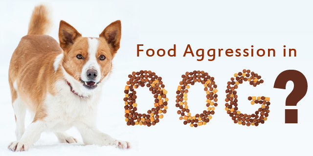 CVE_food-aggression-in-dog