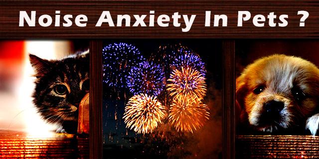 CVE_noice-anxiety