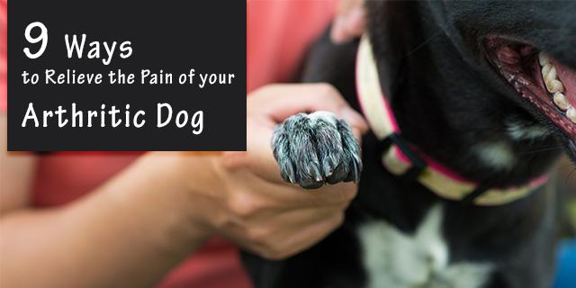 CVE_arthritic-dog