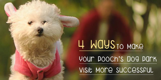 CVE_dog-park-visit
