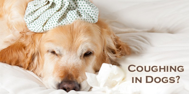 how to stop my dog from coughing