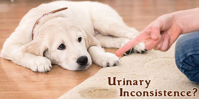 A Complete Veterinary Guide to Involuntary Urinating