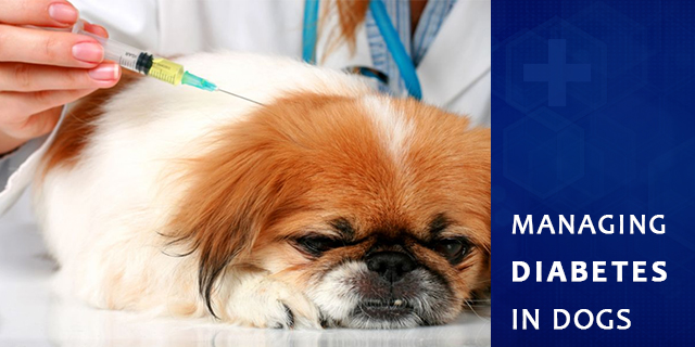 Managing Diabetes in Dogs - When your Veterinarian tells you Half-Truths