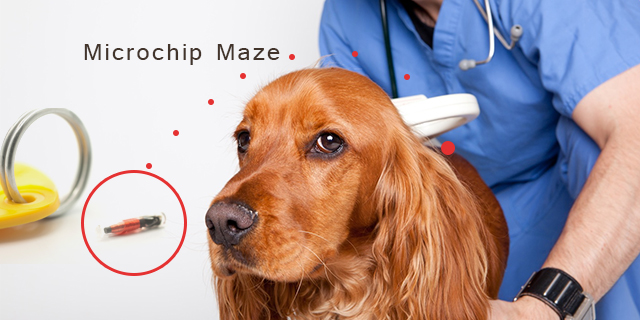 Everything you wanted to know about the Microchip Maze