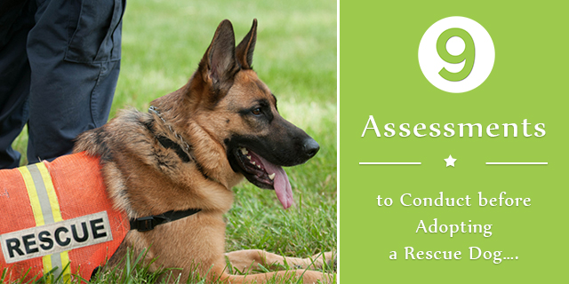 9 Assessments to Conduct before Adopting a Rescue Dog