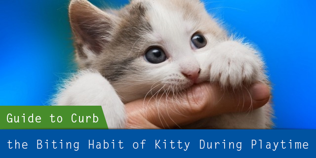 A Step-by-Step Guide to Curb the Biting Habit of my Kitty during Playtime