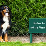 Rules to be Adhered while Visiting Dog Parks