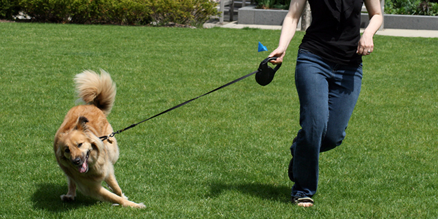 Why Retractable Leash is not Meant for your Doggie