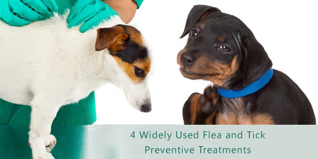 4 Widely Used Flea and Tick Preventive Treatments for Dogs