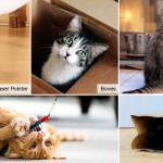 5 Cat Toys and Games Tailor-Made for Entertaining Indoor Cats