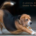 A Logical Explanation for Dogs To Wag their Tails