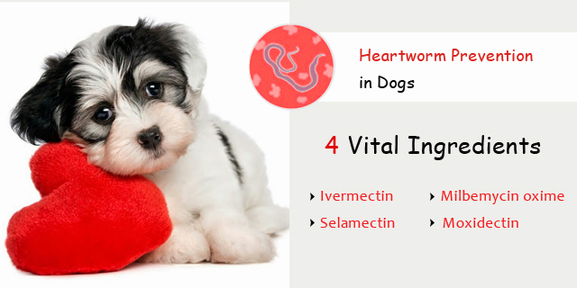4 Vital Ingredients That Are Crucial for Heartworm Prevention in Dogs
