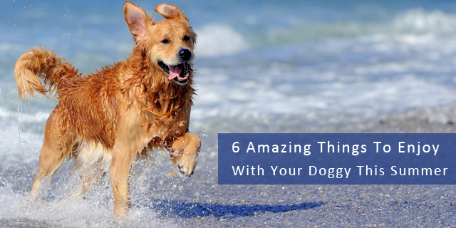 6 Amazing Things To Enjoy with your Doggy This Summer