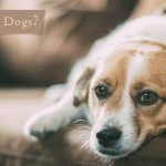 Handling Depression in Dogs in the Most Delicate Manner