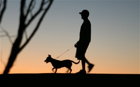 Move Outdoors With Your Pet After Dark
