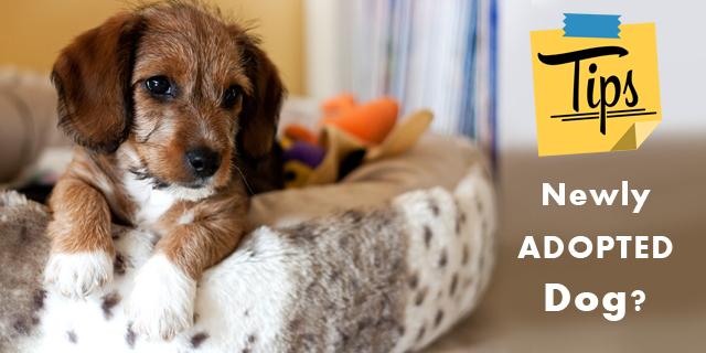 CVE-newly-adopted-dog