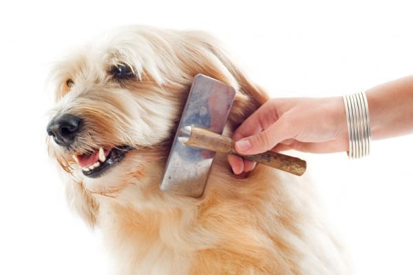 Combing Dog