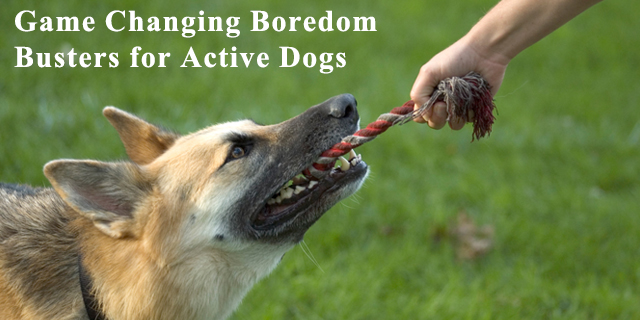Boredom Busters For Active Dogs
