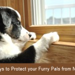 Protect Your Pets From New Year Noise
