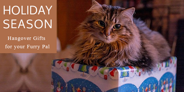 holiday season gift ideas for pets