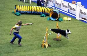 Dog Agility Trials with Fun