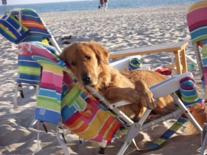 Furry Pal On A Vacation
