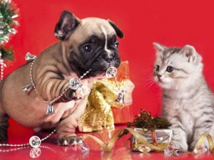 holiday gift ideas for pets