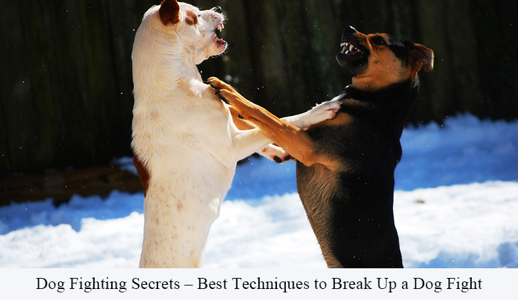 Techniques to Break Up a Dog Fight