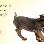 Stop Aggressive Behavior in Dogs