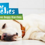 Home Remedies To Relieve Doggy Diarrhea
