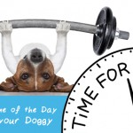 Best Time to Work Out with your Dog