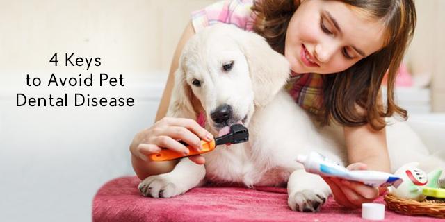 4 Keys to Avoid Pet Dental Disease