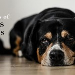5 Symptoms of Worms in Dogs