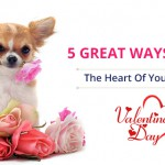 gifts for your doggy on valentine's day