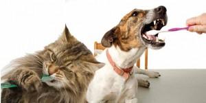 prevent pet dental disease