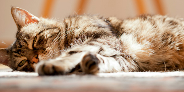 Detecting Arthritis in Cats
