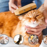 Remedies For Dull Hair Coat in Cats