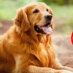 Selecting The Best Flea Tick Control Treatment